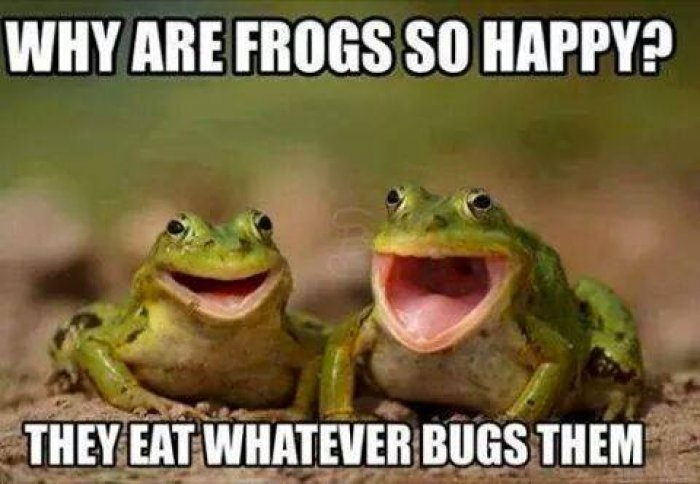 why-are-frogs-be-happy-meme